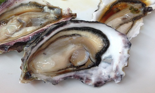 Benefits of Eating Fresh Oysters – Mohnish Mohan Mukkar